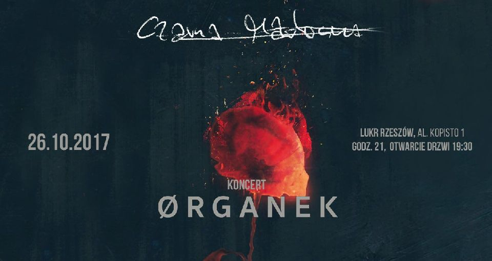 koncert Ørganek LUKЯ Rzeszów